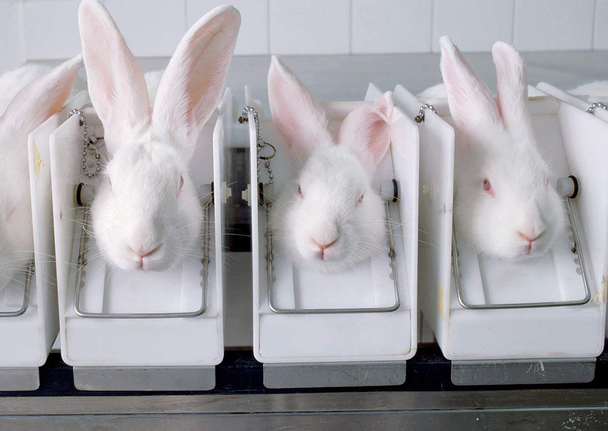 animal testibg Animals are sometimes used in the testing of drugs, vaccines and other biologics, and medical devices, mainly to determine the safety of the medical product for drugs and biologics, the focus of.