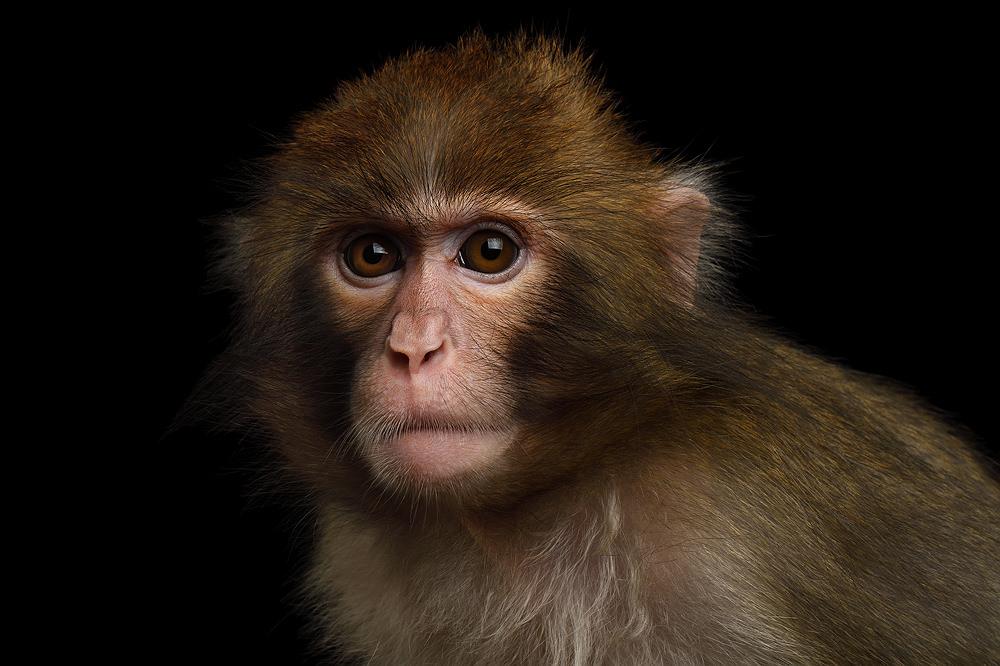 Pair of studies showed vaccine prevented coronavirus infection in monkeys; produced antibodies