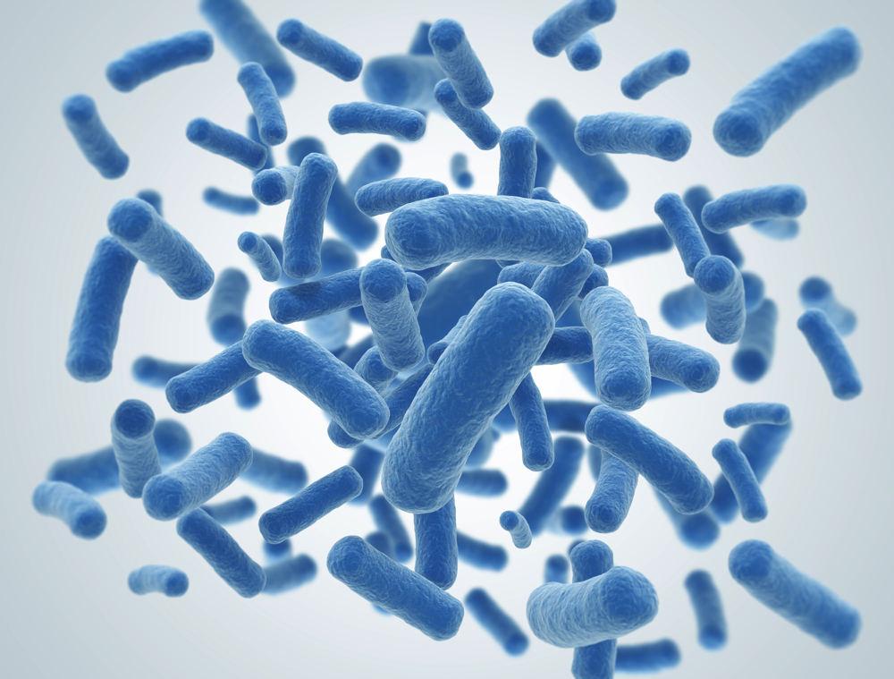 Bacillus Subtilis Wirkung