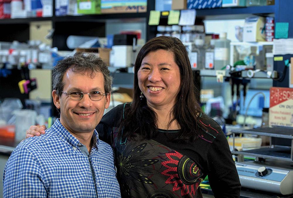 Using precision medicine, Harvard researchers target cancer