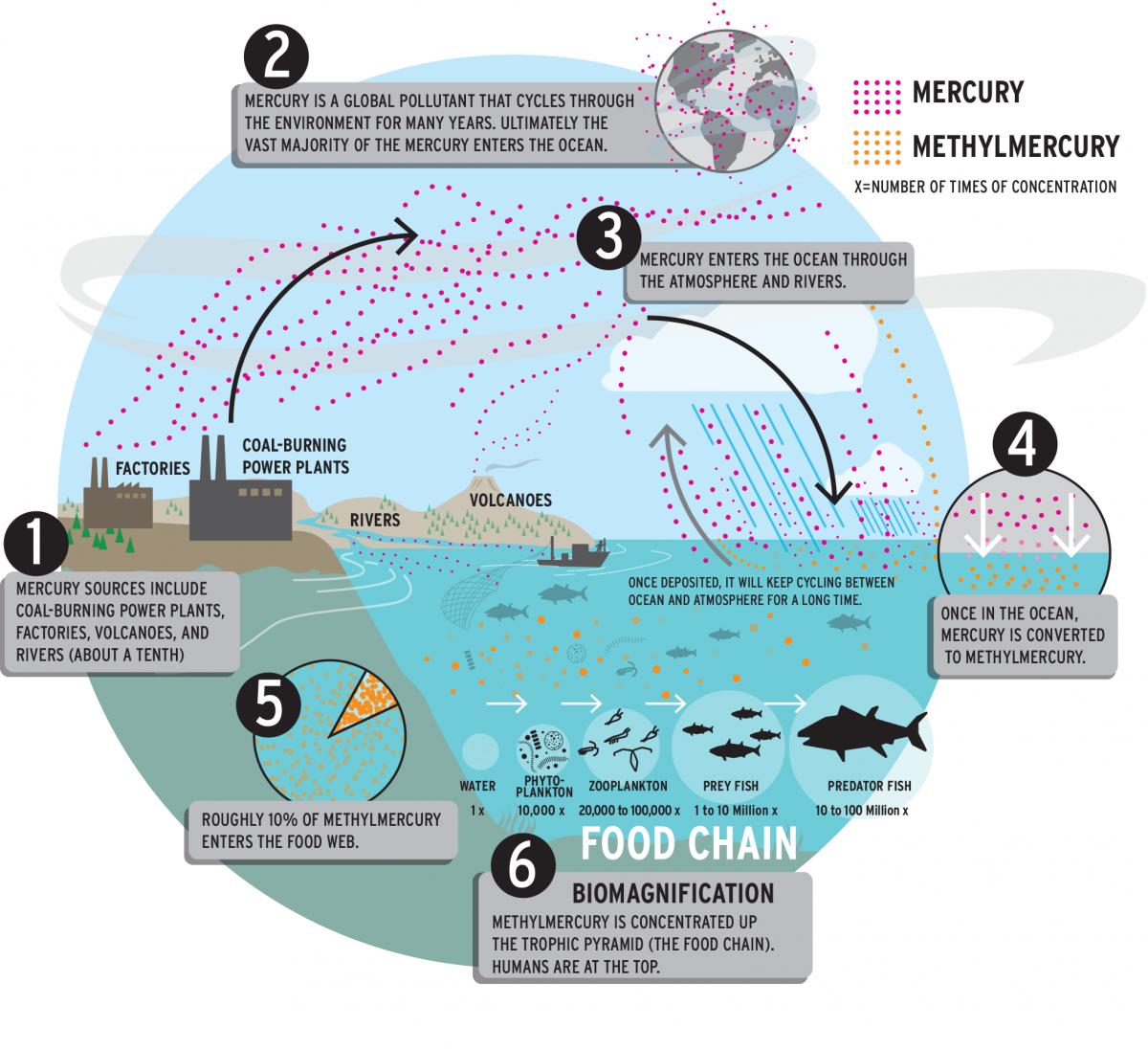 Harvard's Elsie Sunderland maps invisible ocean pollutants | Harvard