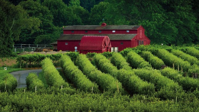 Views of orchards and iconic red bar at Lookout farm