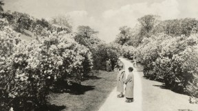 Lilac Sunday at the Arnold Arboretum in 1926