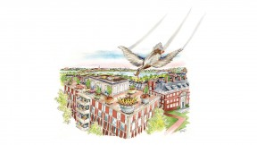 Drawing of a female mallard flying down to her nest on a Harvard rooftop with food for her seven ducklings, each bearing a letter on its chest spelling out H-A-R-V-A-R-D.