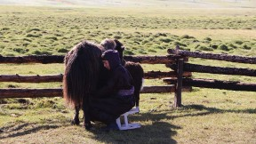 A woman seated on a stool wearing traditional Mongolian garb milks a yak.