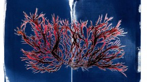 An image of branching red seaweed against a dark-blue background