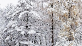 A wintry scene by Meri Bond, at the Arnold Arboretum