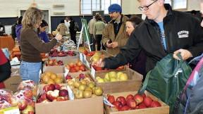 Apples grown at Apex Orchards in Shelburne, Massachusetts