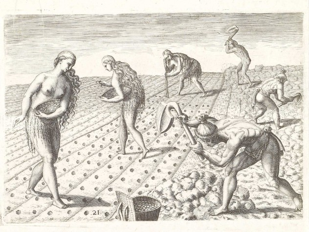 Native Americans cultivating a field