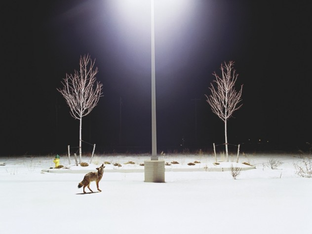 From <i>Domesticated,</i> a series of photographs by Amy Stein on display at the Harvard Museum of Natural History.