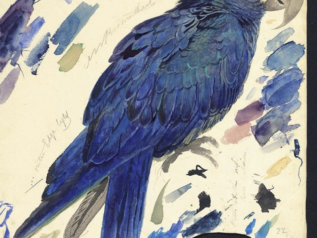Edward Lear's watercolor of an Indigo Macaw, now known as Lear's Macaw (<em>Anodorhynchus leari</em>), at Houghton Library