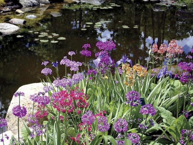 "Pondside in the ""sensory garden&rdquoat Coastal Maine Botanical Gardens"