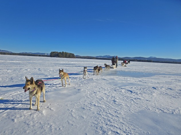 A team of dogs harnessed to a sled