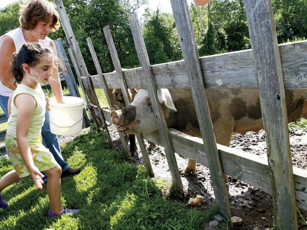 Visitors greet the farm's pigs and chickens.