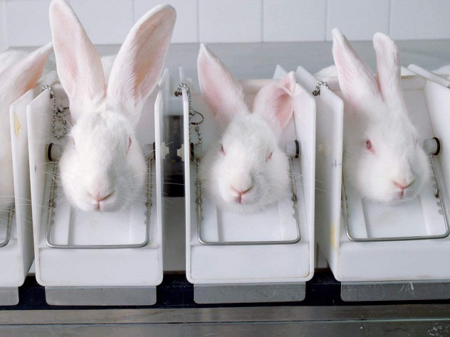 Rabbits being used for testing by the cosmetics industry