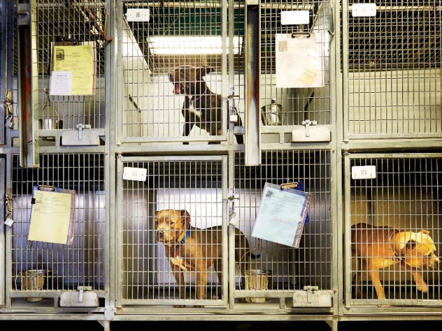 Dogs held in a U.S. shelter