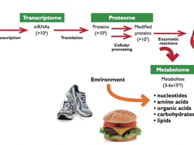 From Genome to Metabolome:  The amount and complexity of data increase from the genome to the transcriptome to the proteome. The metabolome is not only simpler and more  reflective of health status, it also incorporates environmental influences, for example, from exercise and diet.