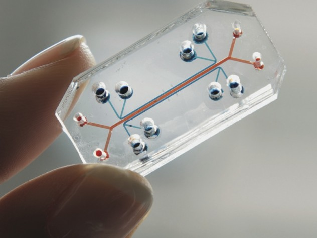 A microchip that mimics a human lung could screen drugs or test for toxins.