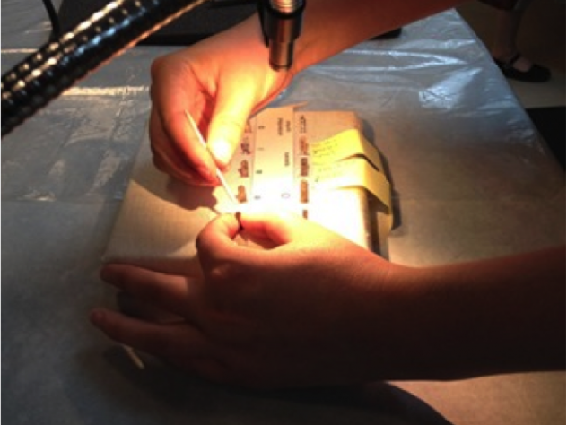 Peabody Museum intern Lindsey Ward cleans pieces of type in preparation for casting replicas.