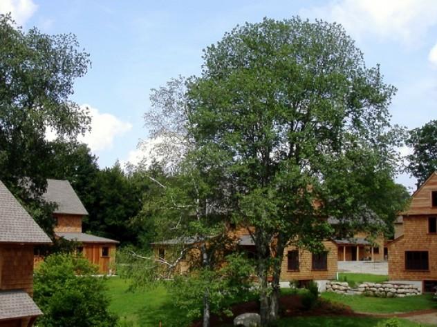Nubanusit designers were careful to preserve the grand old trees