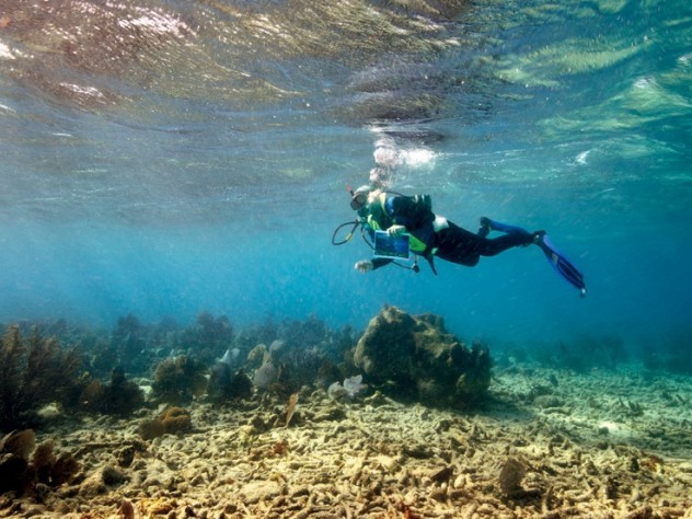 Jerry Greenberg in 2010, above a bed of staghorn coral at Carysfort Reef (six miles east of Key Largo))