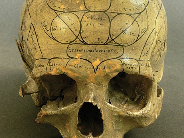 Phrenologists held that the specific site of bumps on the  skull, as marked on this nineteenth-century specimen, helped indicate a subject's cognitive or moral strengths and weaknesses by revealing the volume of brain area beneath each one.