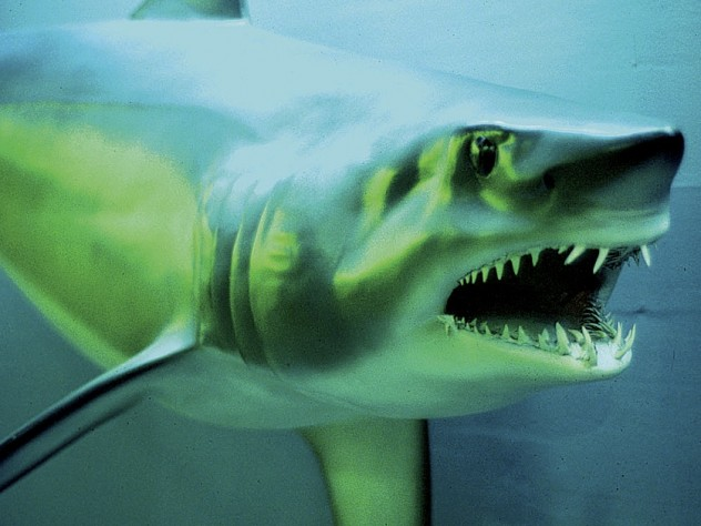 A closeup from the renovated Fishes Gallery at the Harvard Museum of Natural History