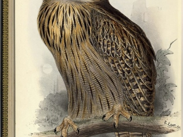 Great Horned or Eagle Owl <i>(Bubo maximus).</i> Hand-colored lithograph, for John Gould, <i>The Birds of Europe.</i>