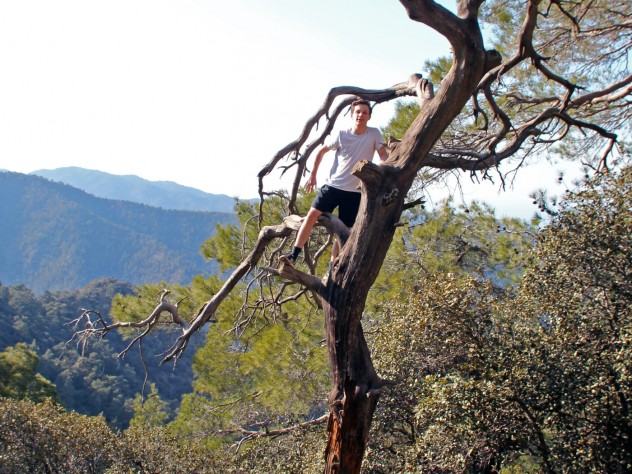 The author climbed this tree in Cyprus's Troodos Mountains, en route to Lagoudera.