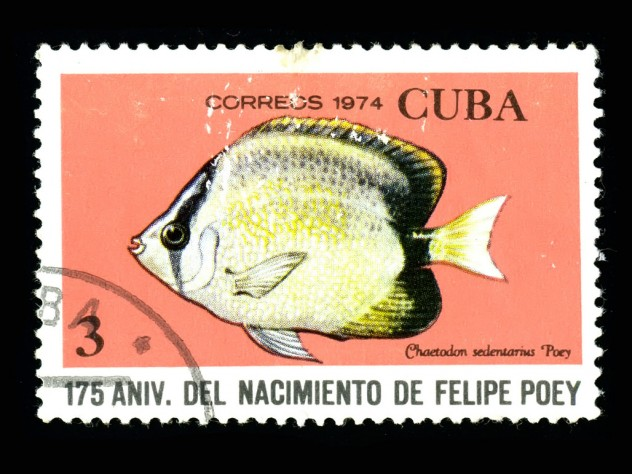 The 1974 Cuban stamps display fish named by Poey.