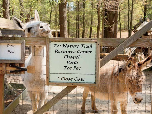 Beyond the entrance, donkeys greet visitors.