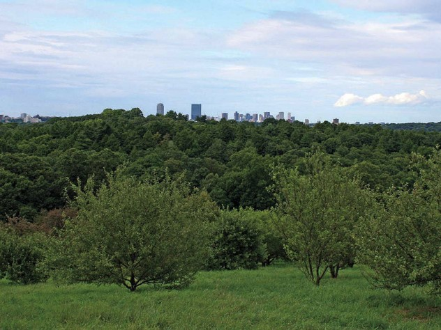 Views of Boston from the arboretum's Peters Hill