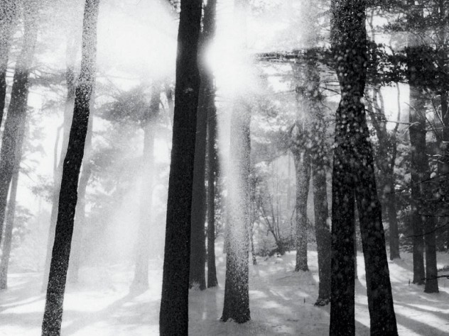 From <i>Trees and Gardens: Photography by Joseph Flack Weiler,</i> at the Arnold Arboretum