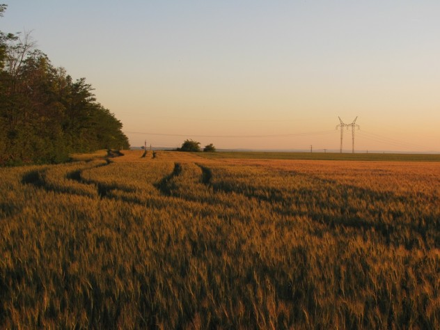 Crop fields in Hungary.