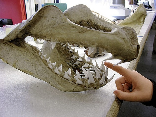 Kids and adults can learn about teeth, bones, and other remains at the Peabody Museum's zooarchaeology lab.