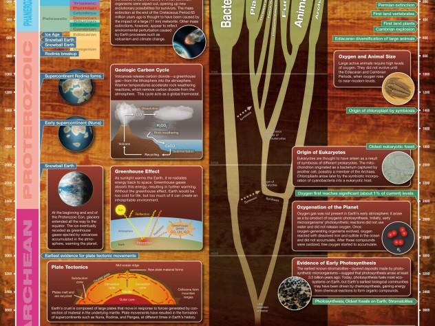 How does carbon hookup support evolution