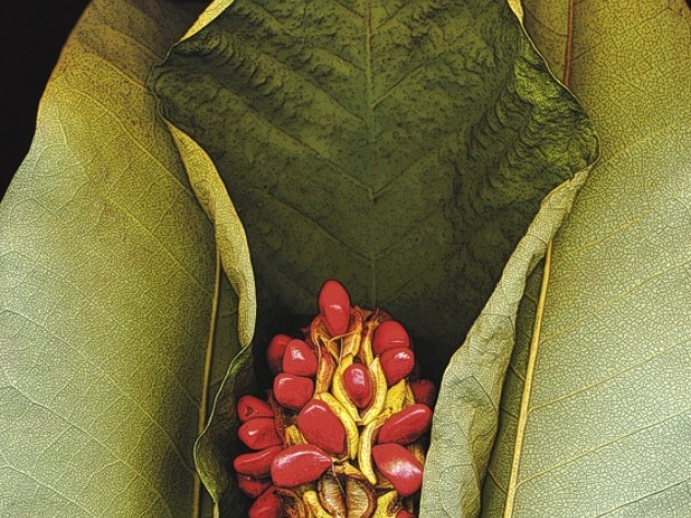 An image for <i>Botanica: Scanography by Marty Klein,</i> at the Arboretum