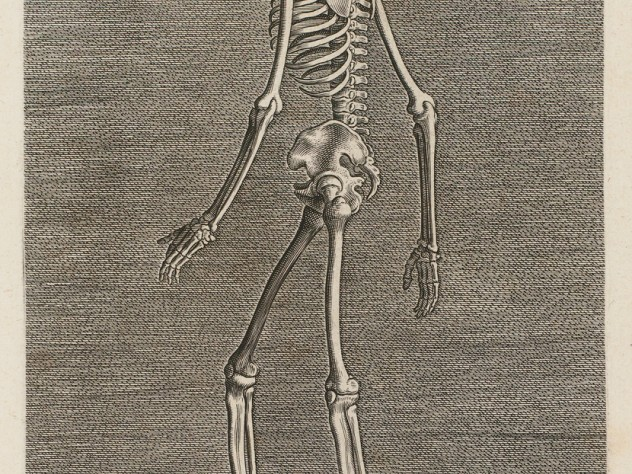 Philip Galle, <i>Skeleton in Left Profile</i> from the series <i>Instruction and fundamentals of good portraiture,</i> Antwerp, 1589. Engravings.