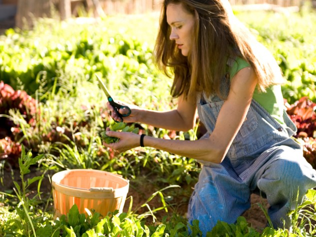 Wade tends her three-acre garden, with a 1,200-square-foot greenhouse, in Nambé, a hamlet 20 miles north of Santa Fe, with help from one other gardener.