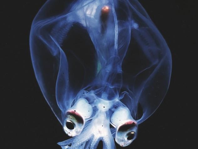 A deep-sea creature on display at the Harvard Museum of Natural History