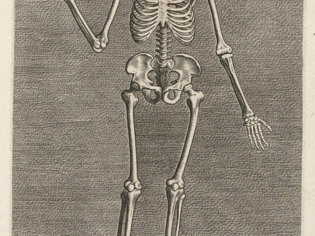 Philip Galle, <i>Skeleton from the Front</i> from the series <i>Instruction and fundamentals of good portraiture,</i> Antwerp, 1589. Engravings.