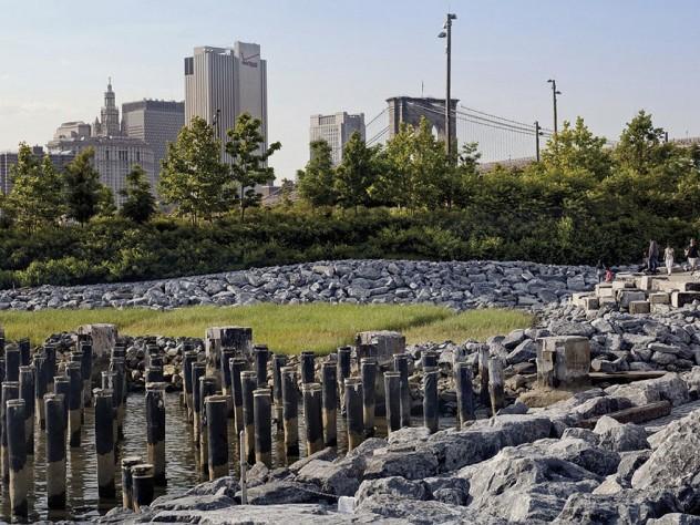 In the park: natural habitat—a newly created salt marsh—at the urban edge