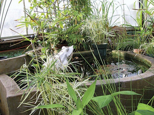 Sounds of burbling water comfort greenhouse visitors on a cold day.