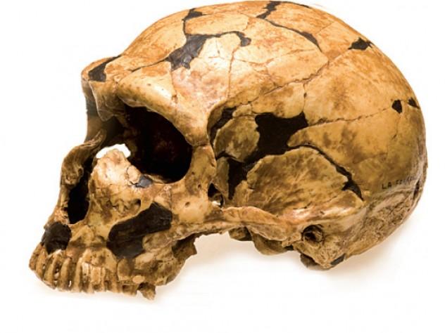 Neanderthal (La Ferrassie)