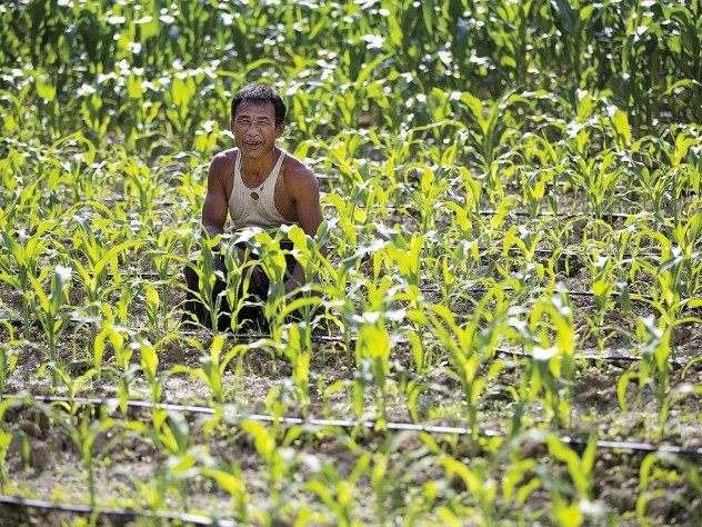 U Myat Thein, an entrepreneurial early adopter of new agricultural technologies, raises corn using Proximity Designs' low-cost, gravity-fed drip-irrigation lines.