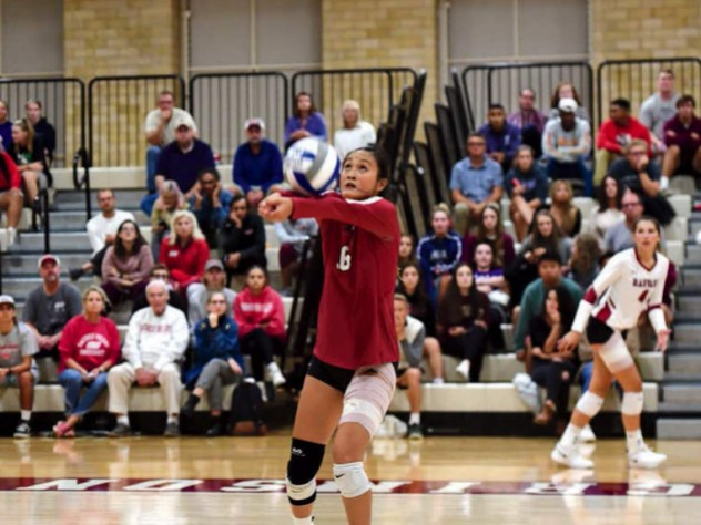 Harvard volleyball player Sandra Zeng setting a ball during a game