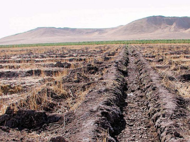 The farm land around Tell Brak's high central mound