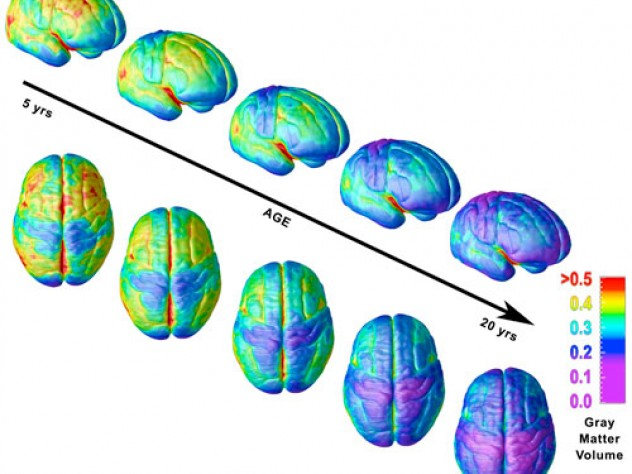 When does the human brain mature