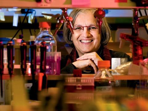 Professor Dyann Wirth leads the Harvard Malaria Initiative.