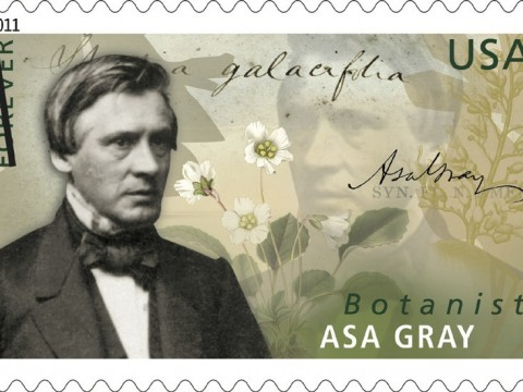 The U.S. Postal Service on June 16 issued a first-class stamp honoring botanist Asa Gray. A natural history professor, Gray also founded the Harvard Summer School 140 years ago. The stamp shows plants that he studied as well as the words <i>Shortia galacifolia</i> in his own hand. The story of his epic quest for that plant is told at http://arnoldia.arboretum.harvard.edu/pdf/articles/838.pdf.